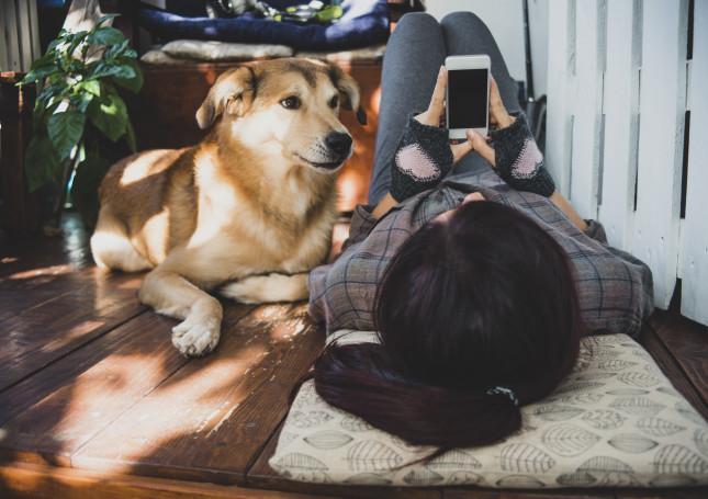 perros-movibles