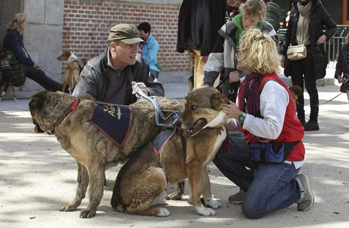 treinta-perros-abandonados-pasean-por-el-parque-madrileno-de-el-retiro-buscando-quien-les-adopte