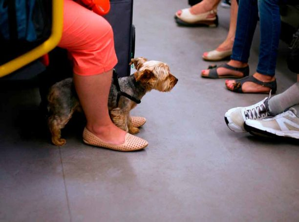 Cómo viajar en transporte público con tu perro
