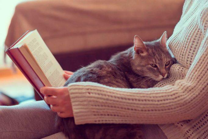 Los gatos son más independientes