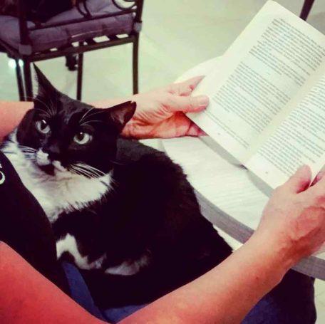 Foto del Instagram de Passets del Gats