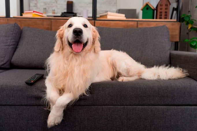 los perros ven la televisión