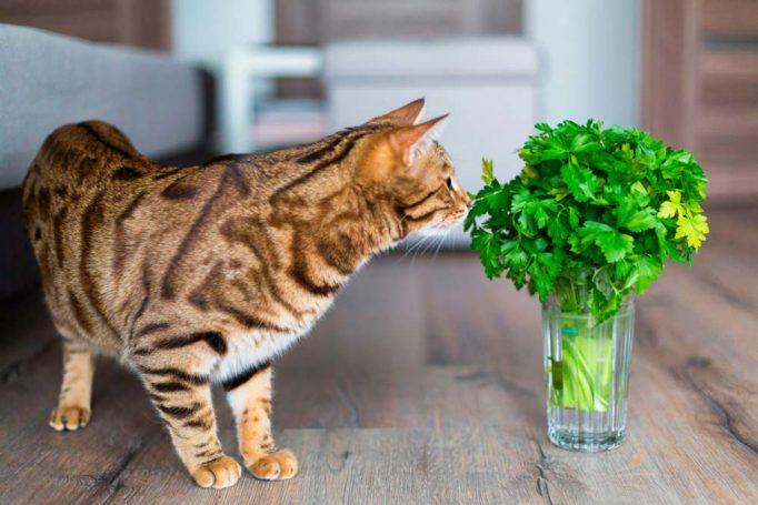 olores que les encantan a los gatos