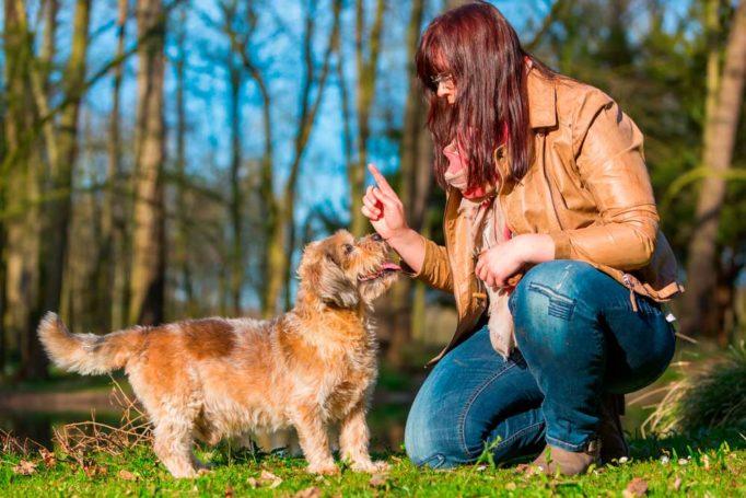 Consejos de enseñar a un perro adulto