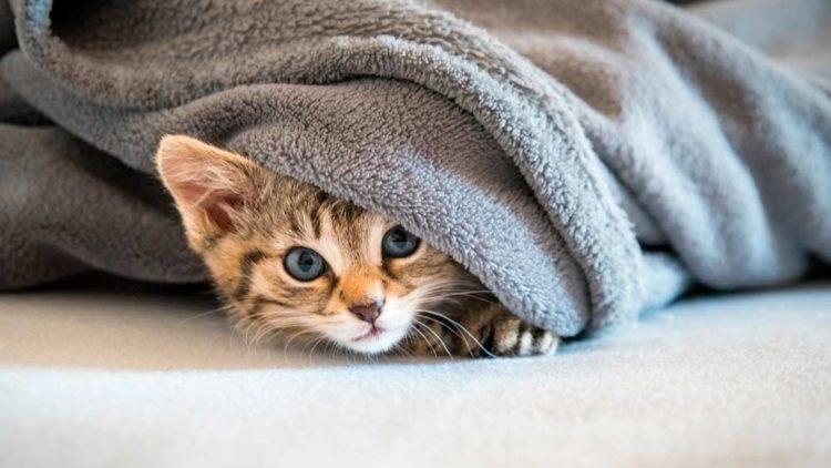 consejos sobre cosas que no le gustan a los gatos