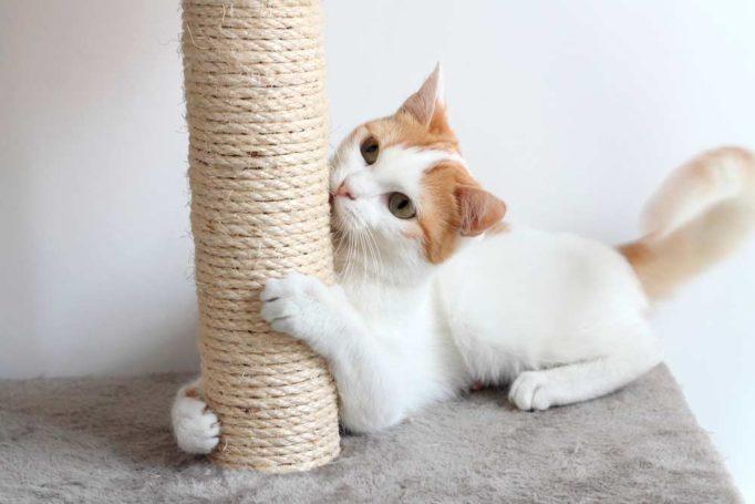 consejos para evitar que tu gato arañe los muebles
