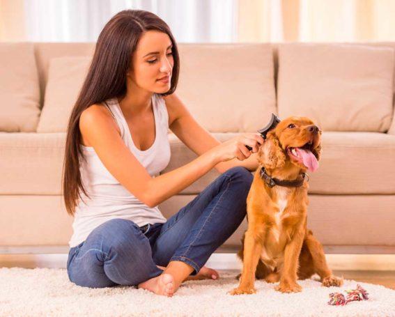 la muda de pelo de tu mascota