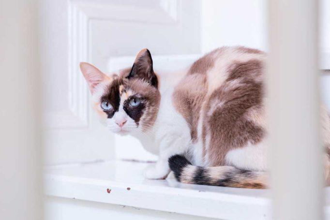 un nuevo gato en casa
