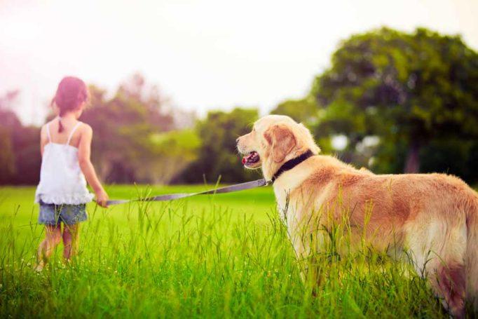 10 beneficios de tener una mascota