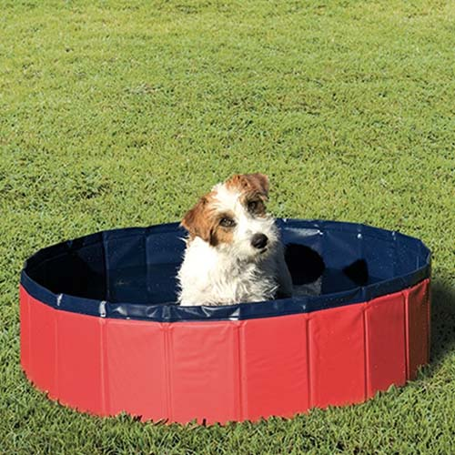 Piscina para Perro Azul y Roja Ibáñez