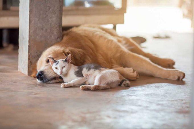 el calor en las mascotas
