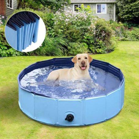 Tipos de piscina para perros