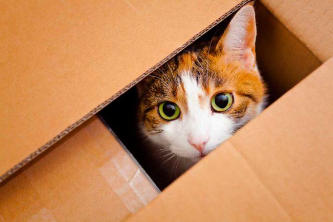 a los gatos les gustan las cajas