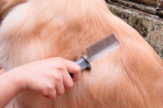 consejos para cuidar el pelo de tu mascota