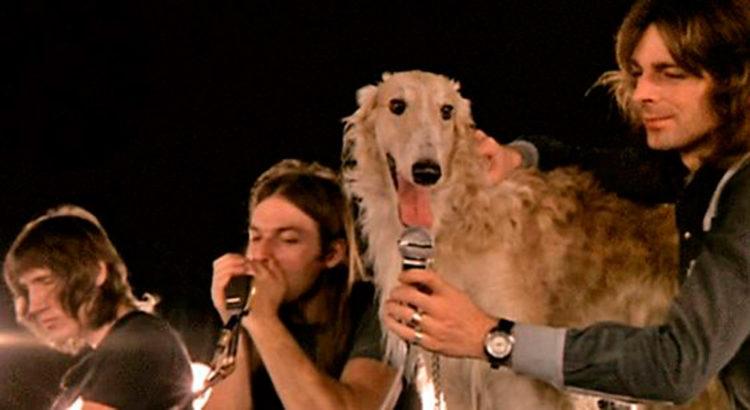 Canciones dedicadas a perros y gatos