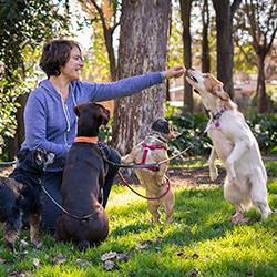 paula gil entrenadora canina manda de perros grandes y pequeños